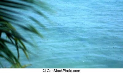 palm branch moving in wind and rain drops fall into the sea....