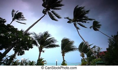 Rainy season on tropical region.  Ocean shore in waiting of typhoon at the evening, Palm tree windy. Video