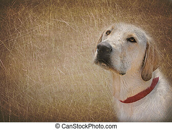 Man\'s Best Friend - Labrador retriever in texture.