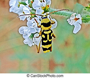 Beetle on flower