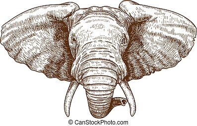 engraving elephant head - vector illustration of engraving...