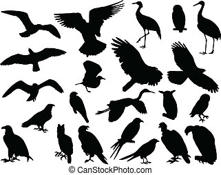 birds collection - vector