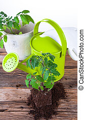 graden - Fresh seedling, young plant on wood background....
