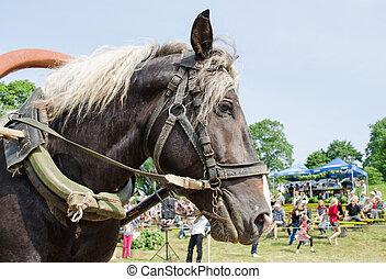 Häst, Uppe, seldon, svart,  mane, nära, vit, huvud