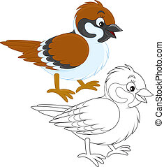 Sparrow - sparrow, color and black and white illustrations...