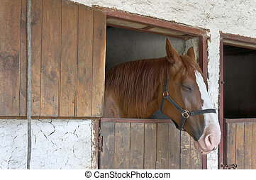 Sleeping horse in the stable