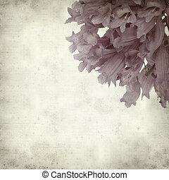 textured old paper background with Jacaranda;