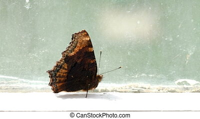 Brown spotted butterfly walking on the windowsill