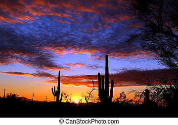 Sonora Desert Sunset Near Tucson Arizona