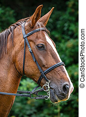 Horse profile - Side view portrait of brown horse with reins