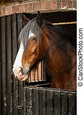 Horse head - Side profile of brown horse in stable