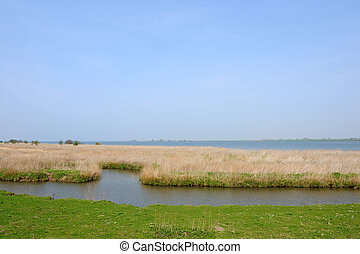 water landscape - Bog water landscape in Holland with a...