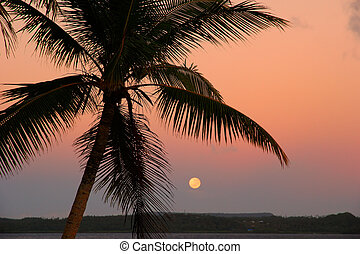 Silhouetted palm tree with the moon, Ofu island, Tonga
