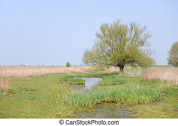 water landscape - Water landscape in Holland with tree near...