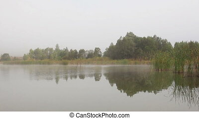 lake landscape in mist - trees and reeds reflected in water