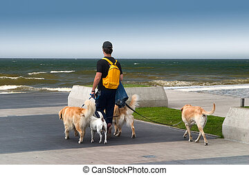 Man walking dogs on the beach, during a summer evening
