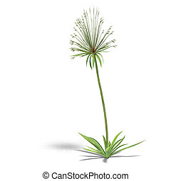 Papyrus - papyrus bush. 3D render with clipping path and...