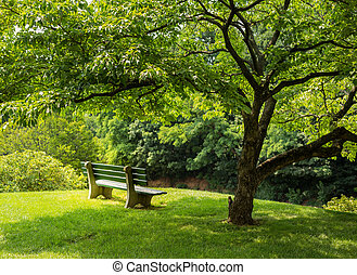 Park bench under flowering dogwood tree - Lonely single park...