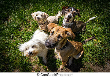 Waiting for reward - 4 dogs sitting in one spot and look for...