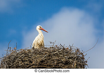 Stork - A stork stands erect and proud in its nest, in the...