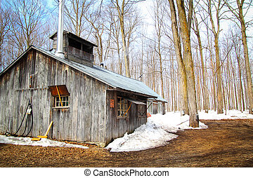 Sugar shack - Beautiful and aged sugar shack during spring...