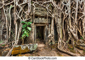 Ancient stone door and tree roots, Ta Prohm temple, Angkor,...