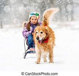 little girl with sledge and dog - Furry Golden Retriever...