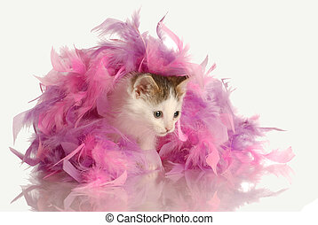 playful kitten - kitten playing in pink feathers isolated on...