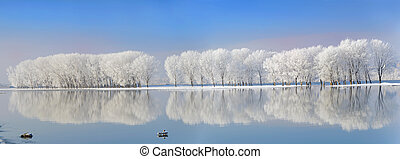 coberto, geada, Inverno, árvores