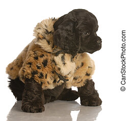 cute cocker spaniel puppy wearing a fur coat