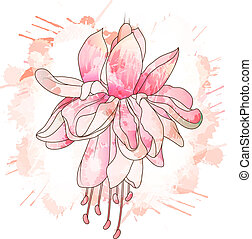 Fuchsia flower drawing