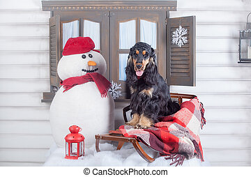 English cocker spaniel with winter decoration - Purebred...