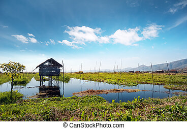 Inle Lake Myanmar, Shan state. Floating gardens of rural...