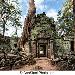 Angkor Wat Cambodia. Ta Prohm Khmer ancient Buddhist temple...