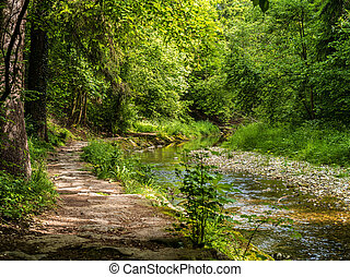 Path and stream in the forest