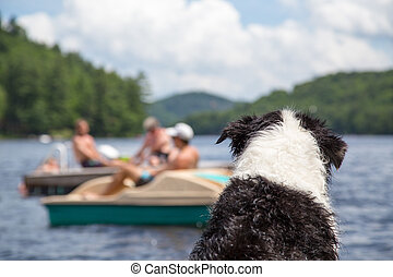 Dog watches activity on the lake - A wet dog sitting on the...