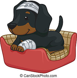 First Aid Dog - Illustration of a Cute Dachshund Sporting...