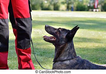 Schaefer steht vor Trainer - Shepherd standing in front of...