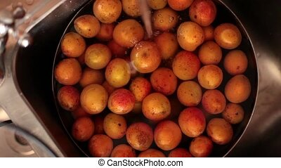 Washing Apricots - Overhead video of hand washing apricots....