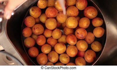 Apricots Wash - Video clip of hand washing apricots under...