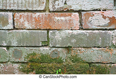 Texture of a brick foundation with an old moss