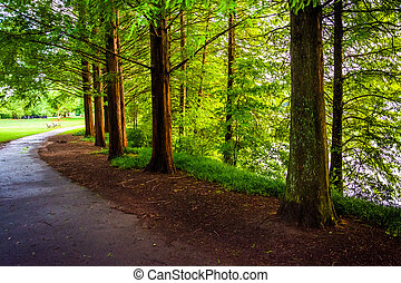 Trees along a path at Piedmont Park in Atlanta, Georgia. -...
