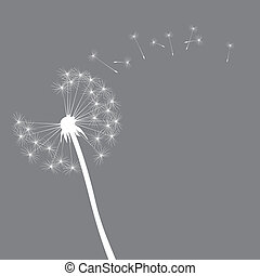 vector dandelion illustration