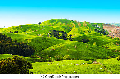 Hills of the New Zealand - Beautiful green hills covered by...