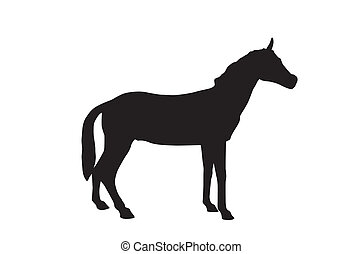 Horse Isolated on White Background. Vector Illustration....