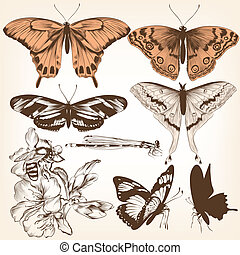 Collection of vector butterflies fo