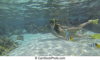 Woman snorkeling - Beautiful woman snorkeling in clear blue...