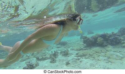 Woman snorkeling - Beautiful woman snorkeling in clear blue...