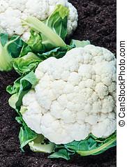 cauliflower on the ground