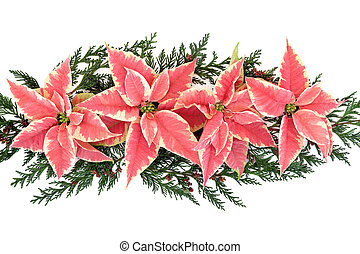Poinsettia Flower Display - Poinsettia flower thanksgiving...